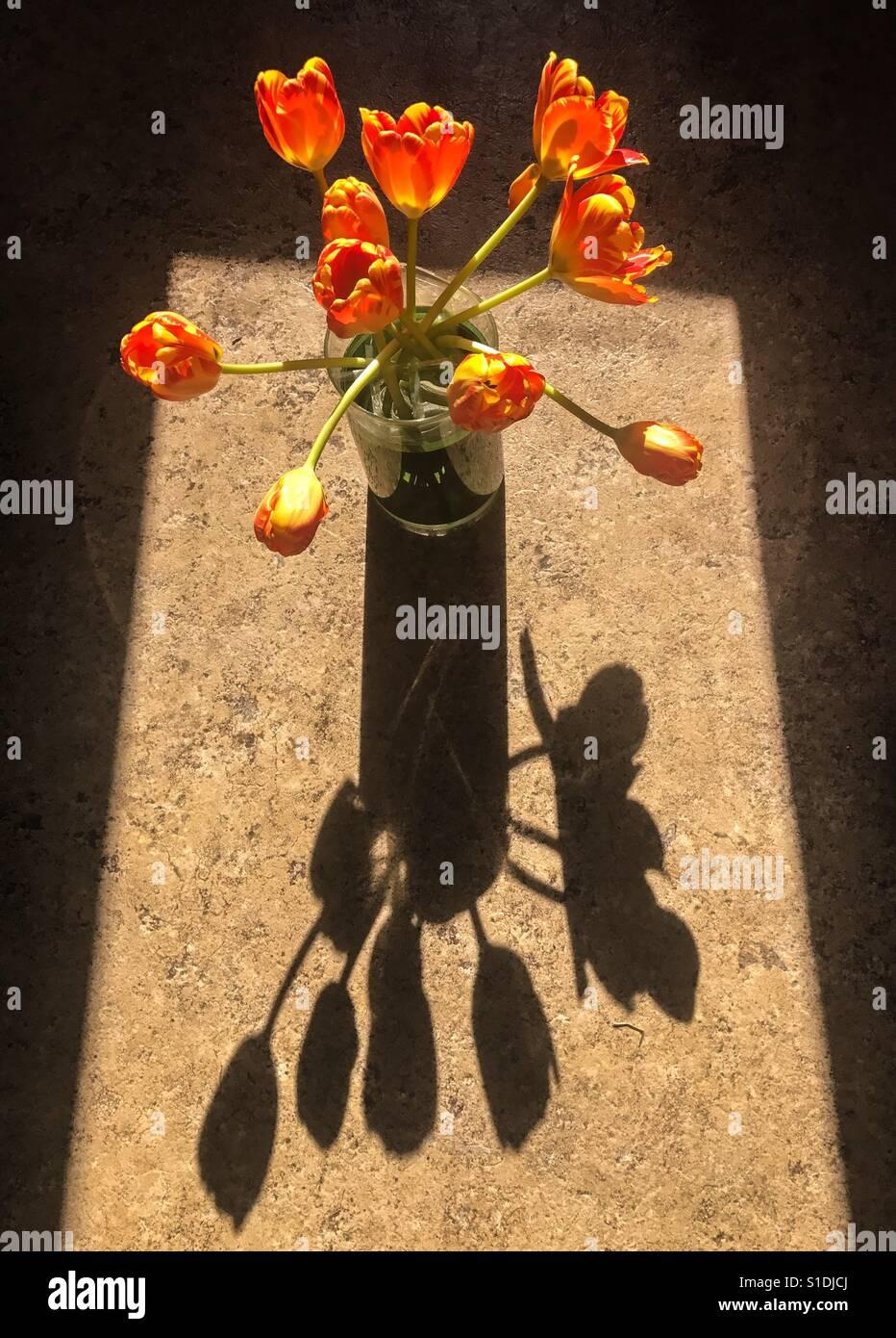 La lumière du soleil et des tulipes Banque D'Images