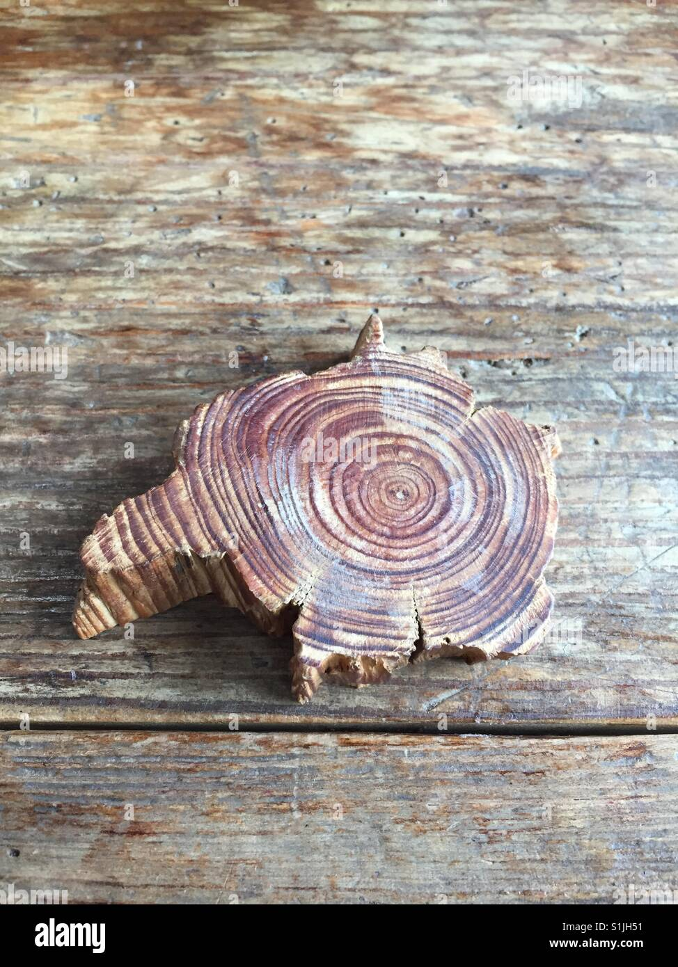 Close up of wood Photo Stock