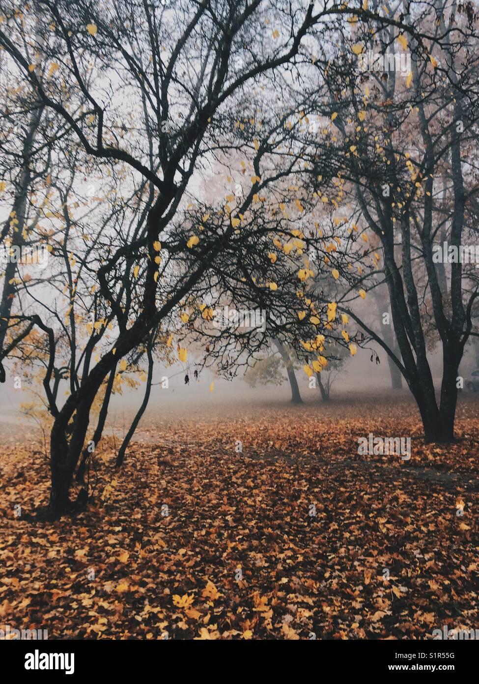 Landscapic mystérieuse scène avec arbres en automne brouillard. Photo Stock