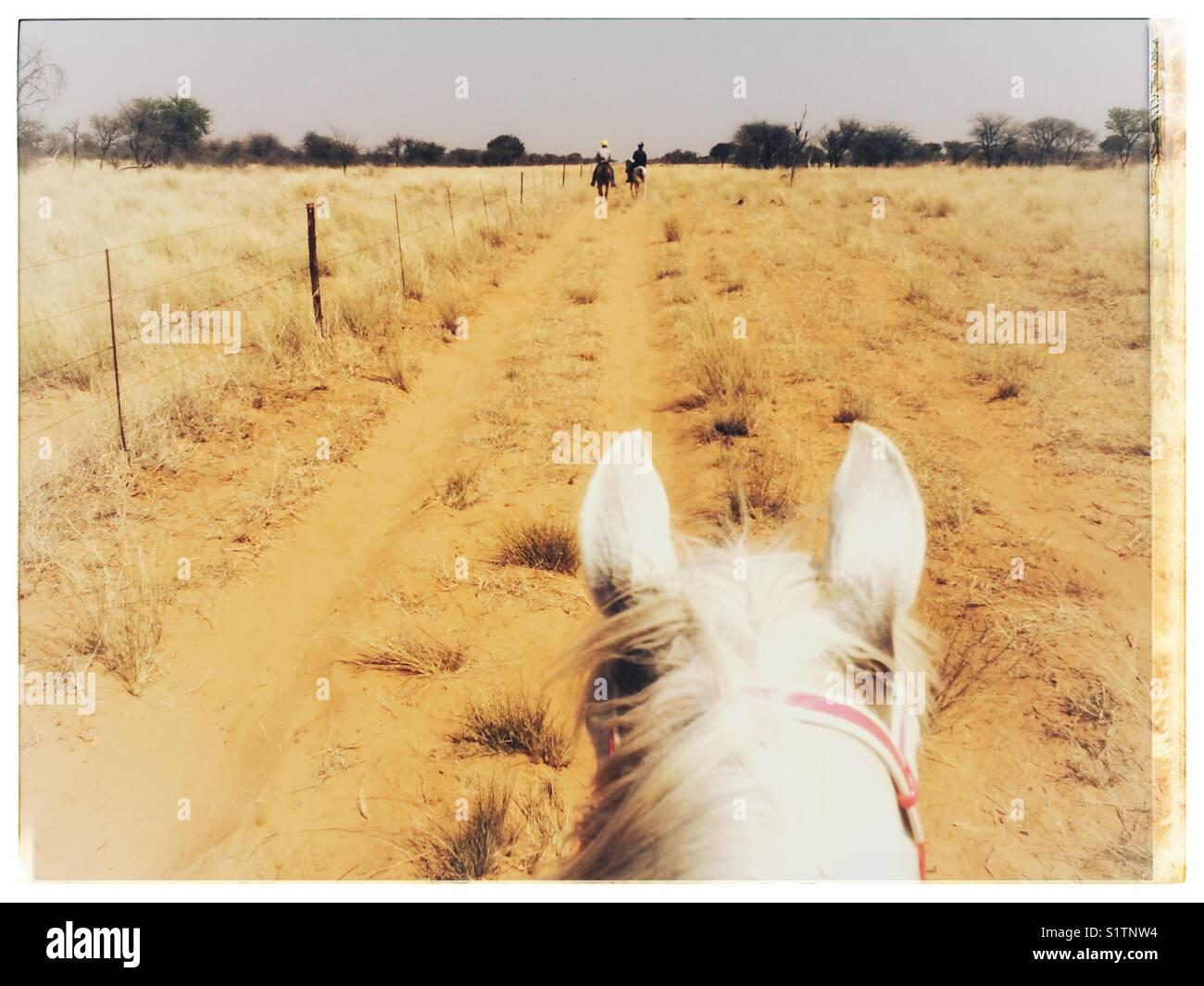 Une vue de l'avenant au cours de l'équitation dans la région du Kalahari d'Afrique du Sud. Photo Stock