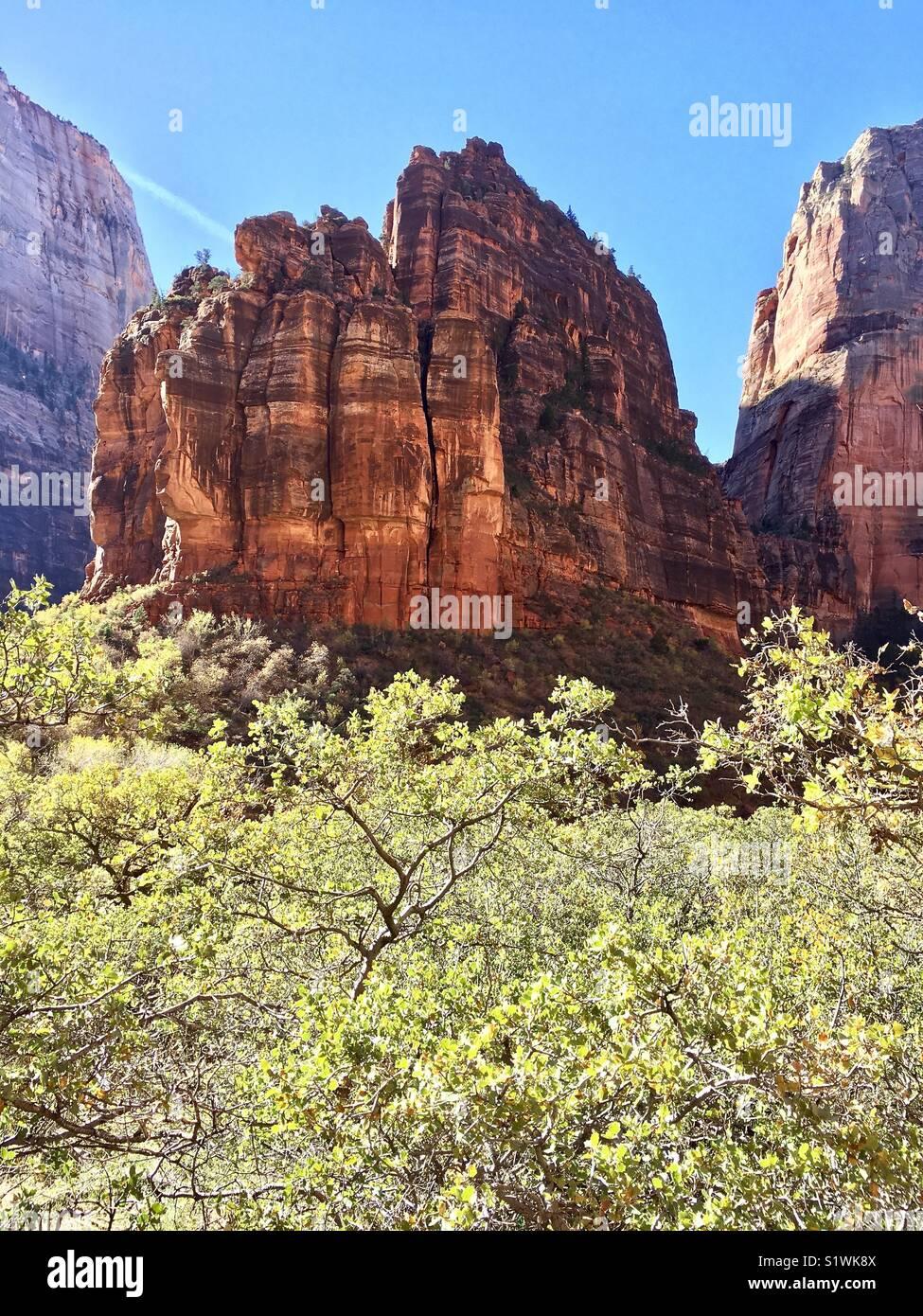 Les roches rouges de Zion National Park Photo Stock