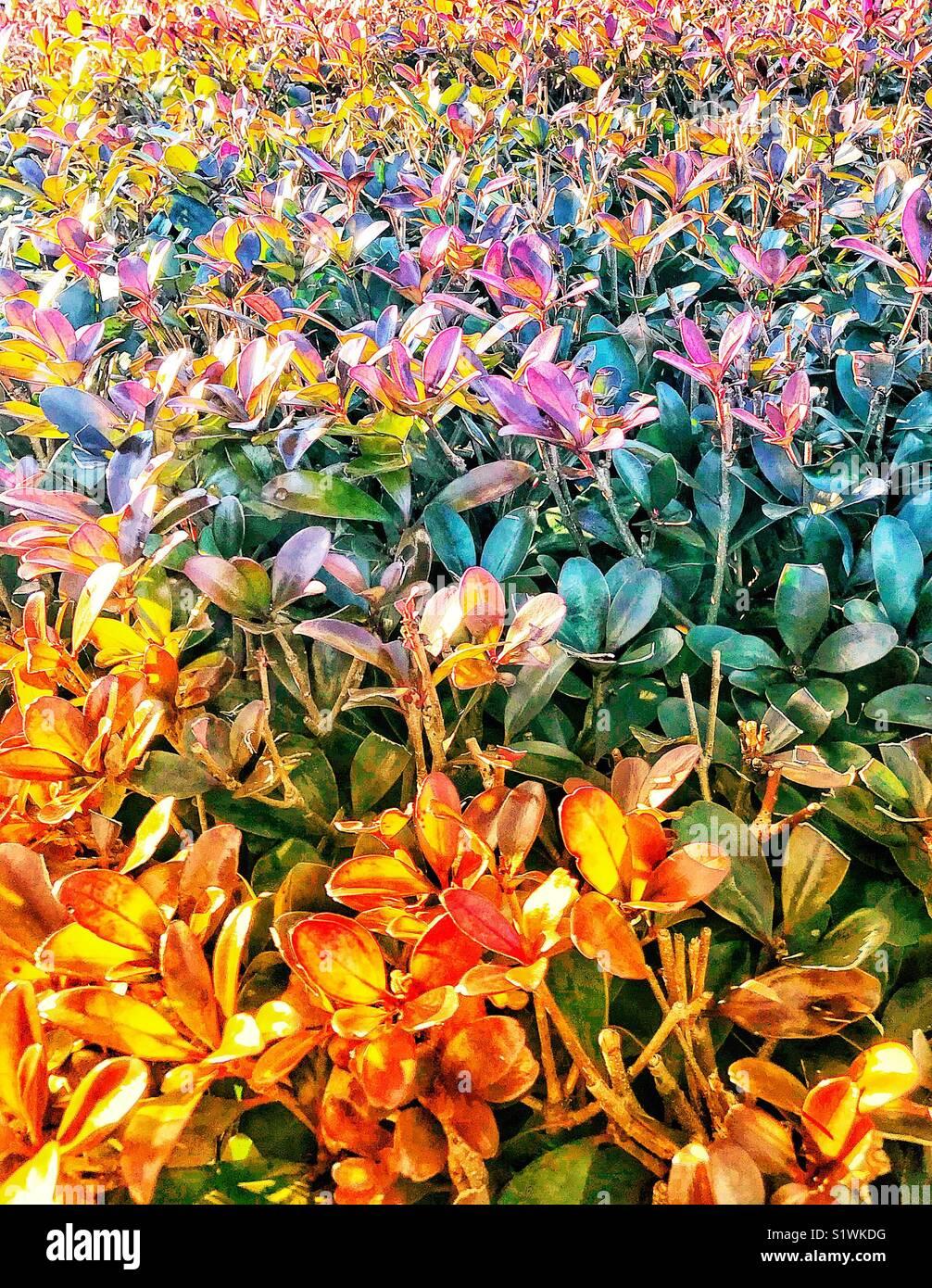 Champ de fleurs Photo Stock