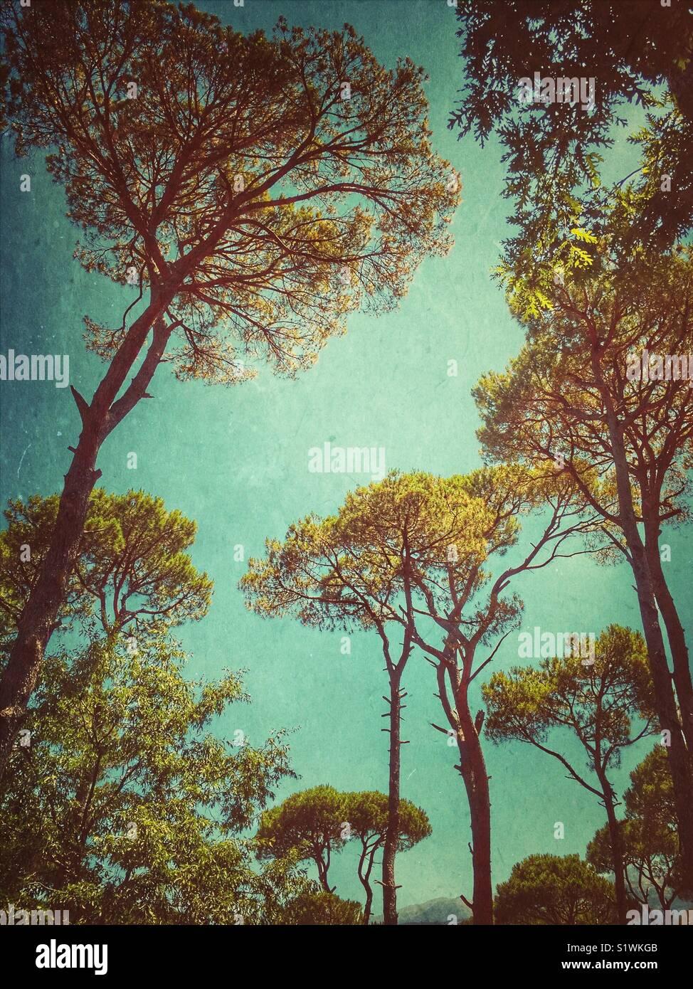 Forêt en Jizzine Liban Photo Stock