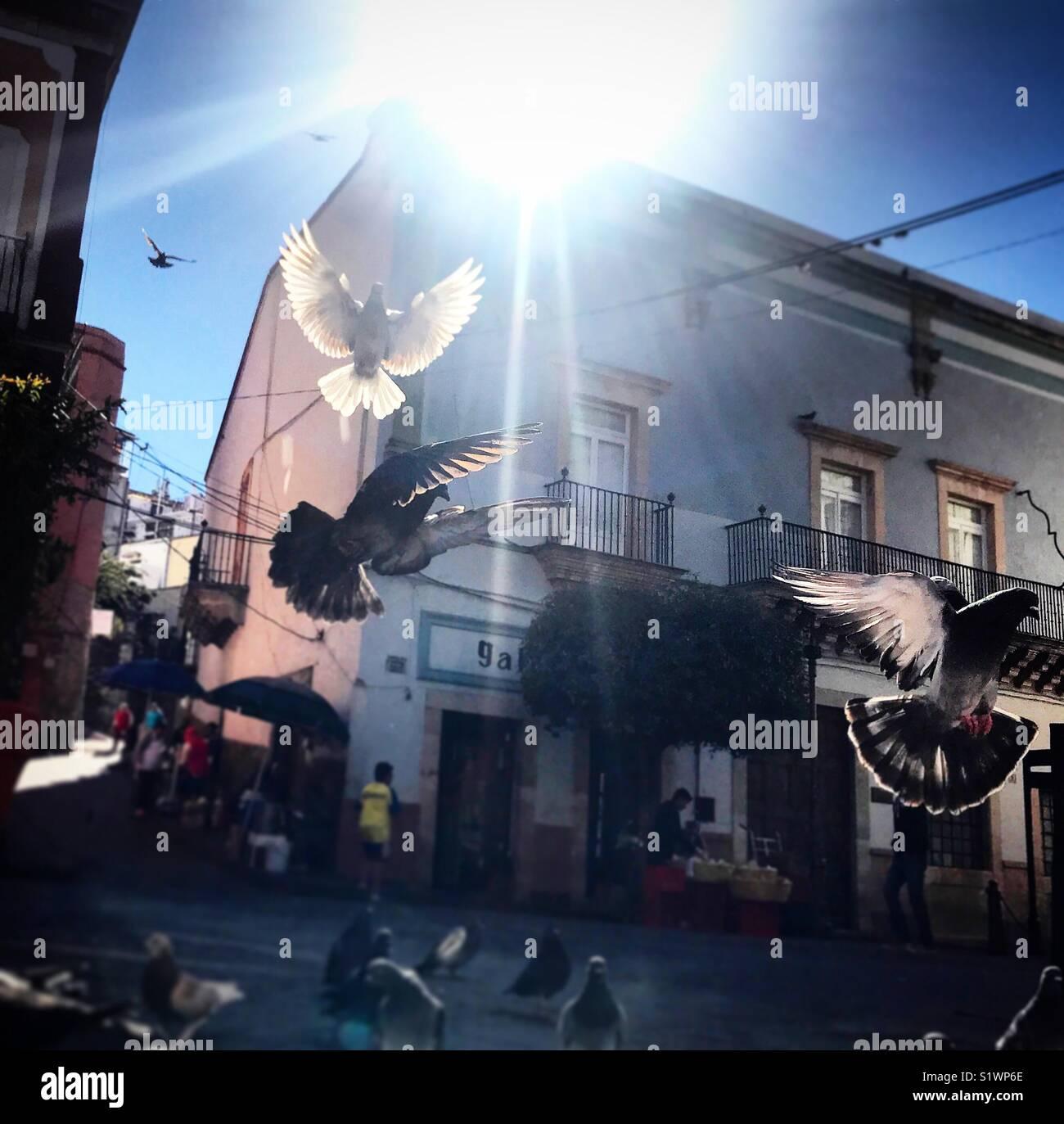 Les pigeons volent sous le soleil à Guanajuato, Mexique Photo Stock