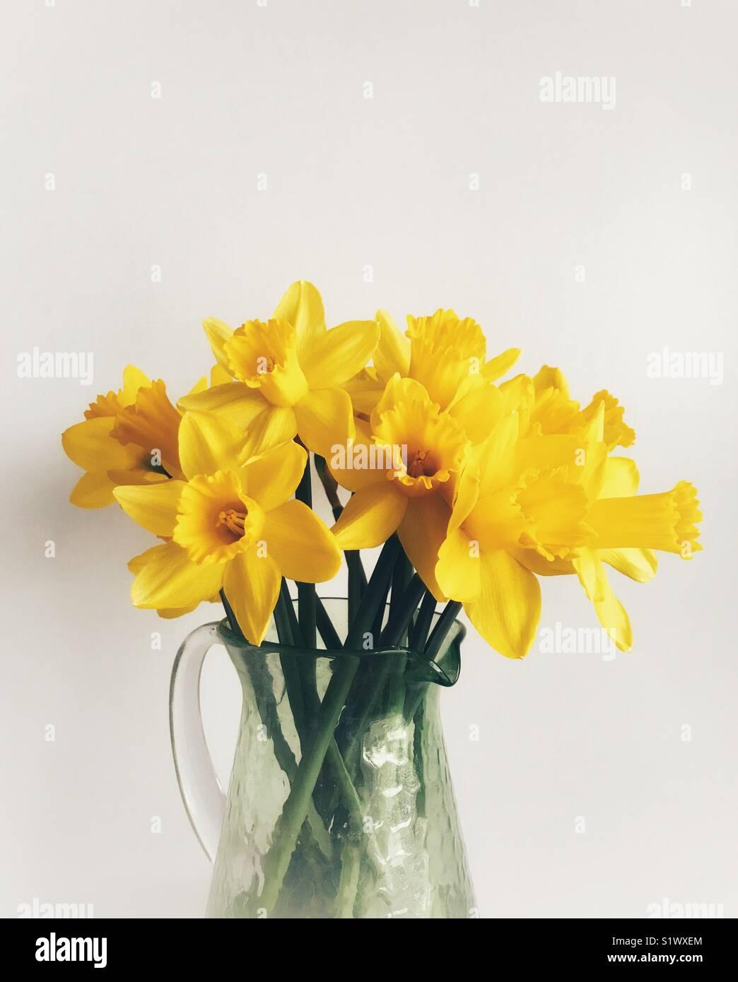 Les jonquilles dans un vase en verre vert contre un fond uni Photo Stock