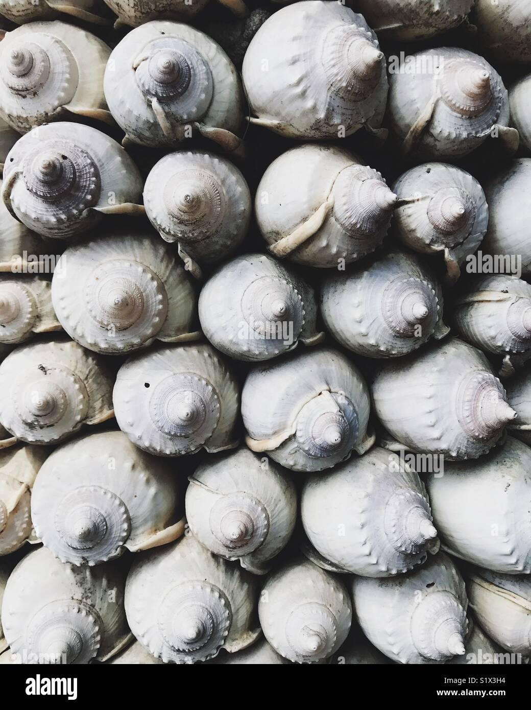 De nombreux coquillages Photo Stock