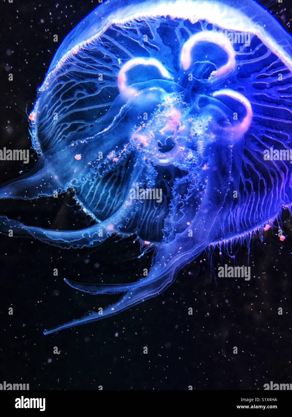 Les couleurs néon lumineux de la méduse. Photo Stock