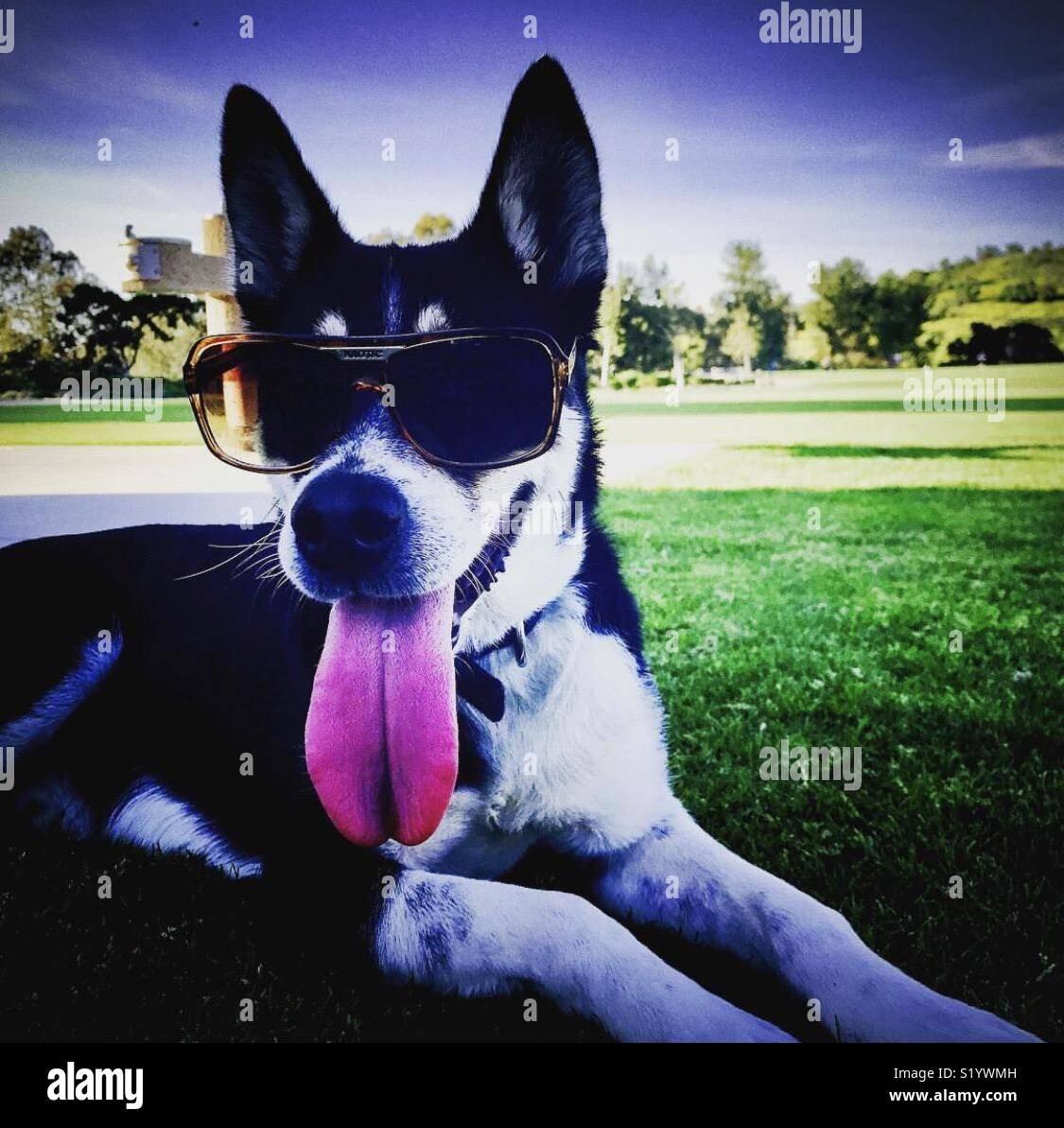 Jours d'été Photo Stock