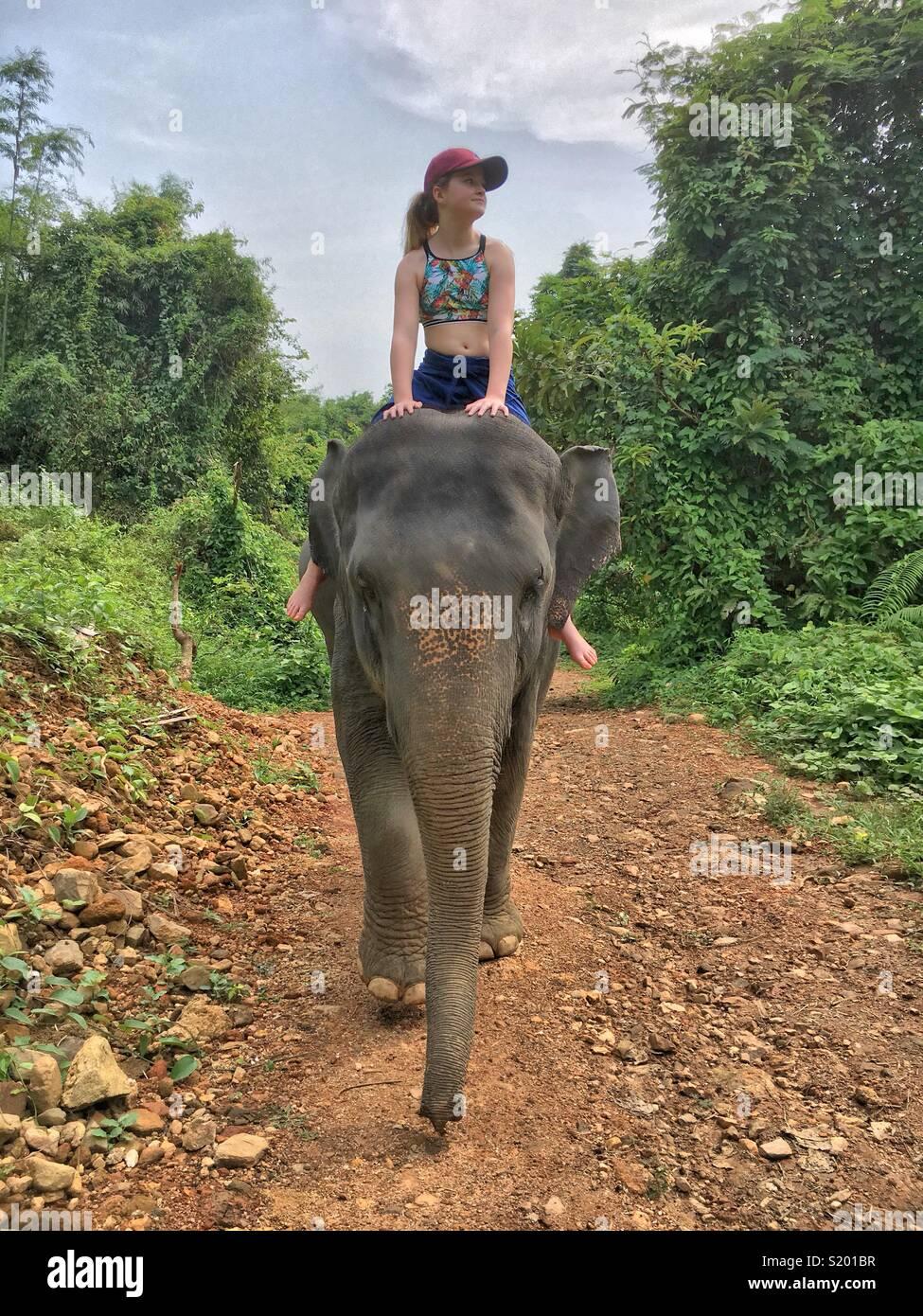 Jeune fille à cheval sur un éléphant - avant Photo Stock