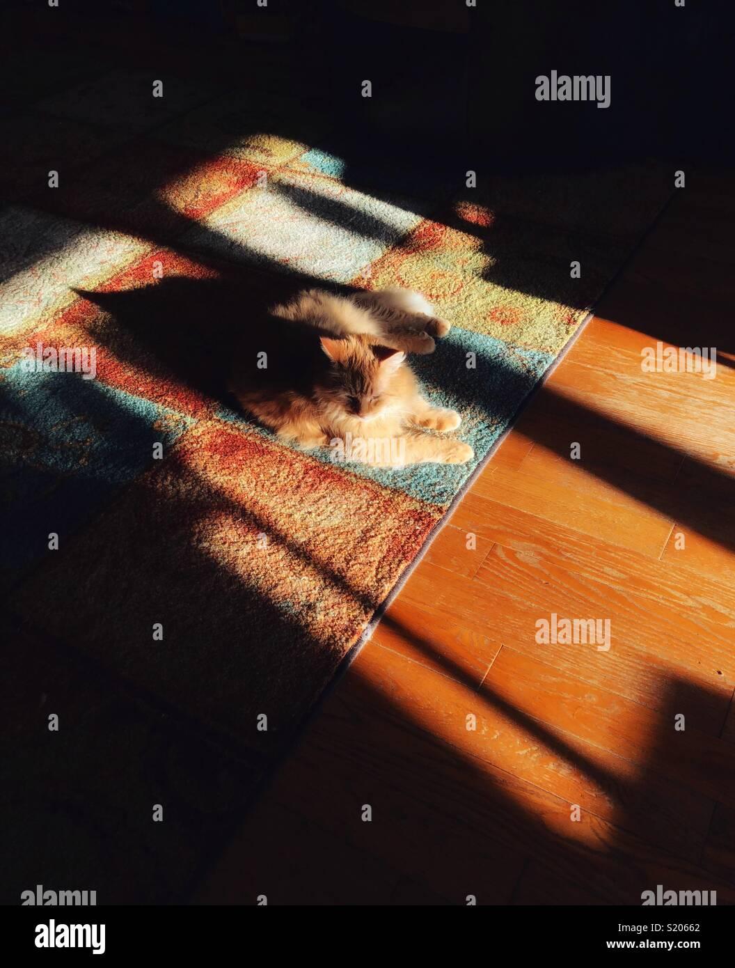 Chat orange portant dans le soleil du matin sur un tapis avec des ombres dramatiques Photo Stock