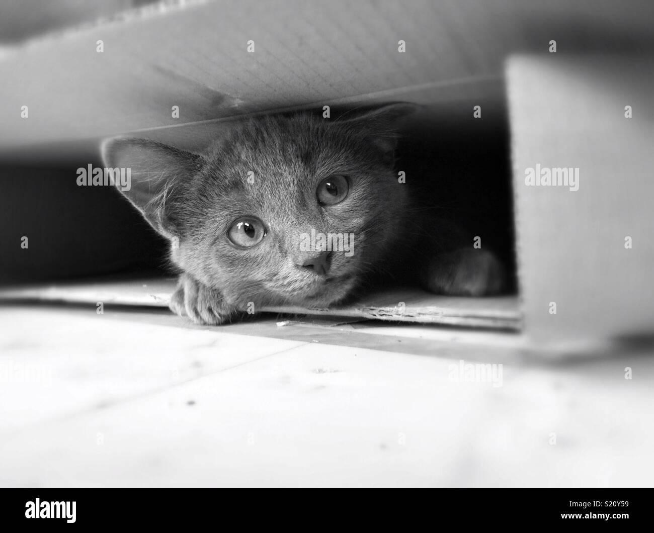 Se cacher dans une boîte de chat Photo Stock