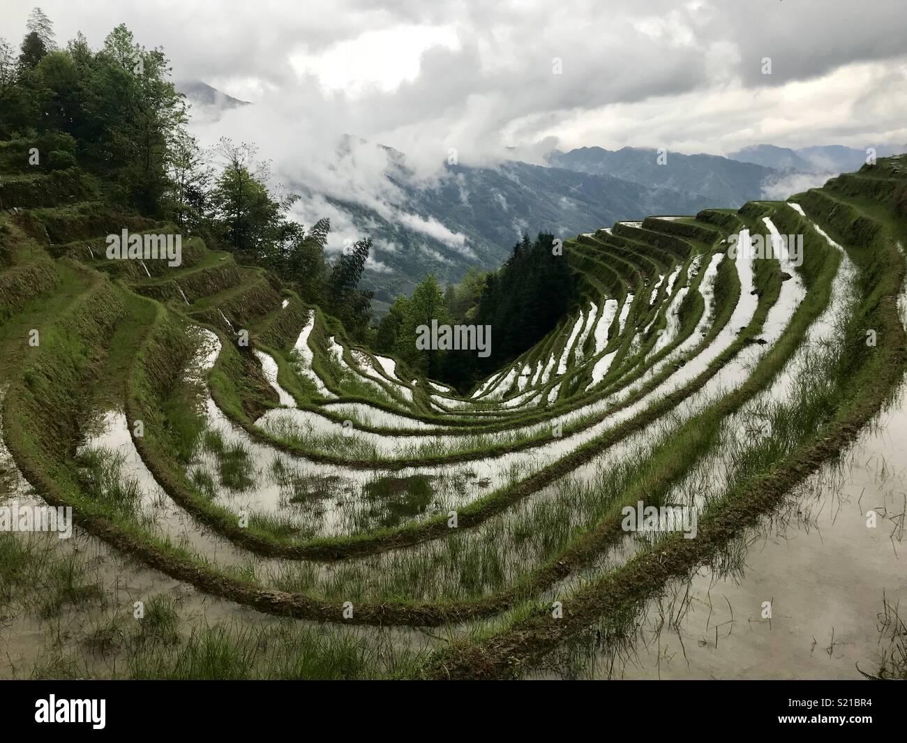 Terrasses de riz en Chine, Longji Photo Stock