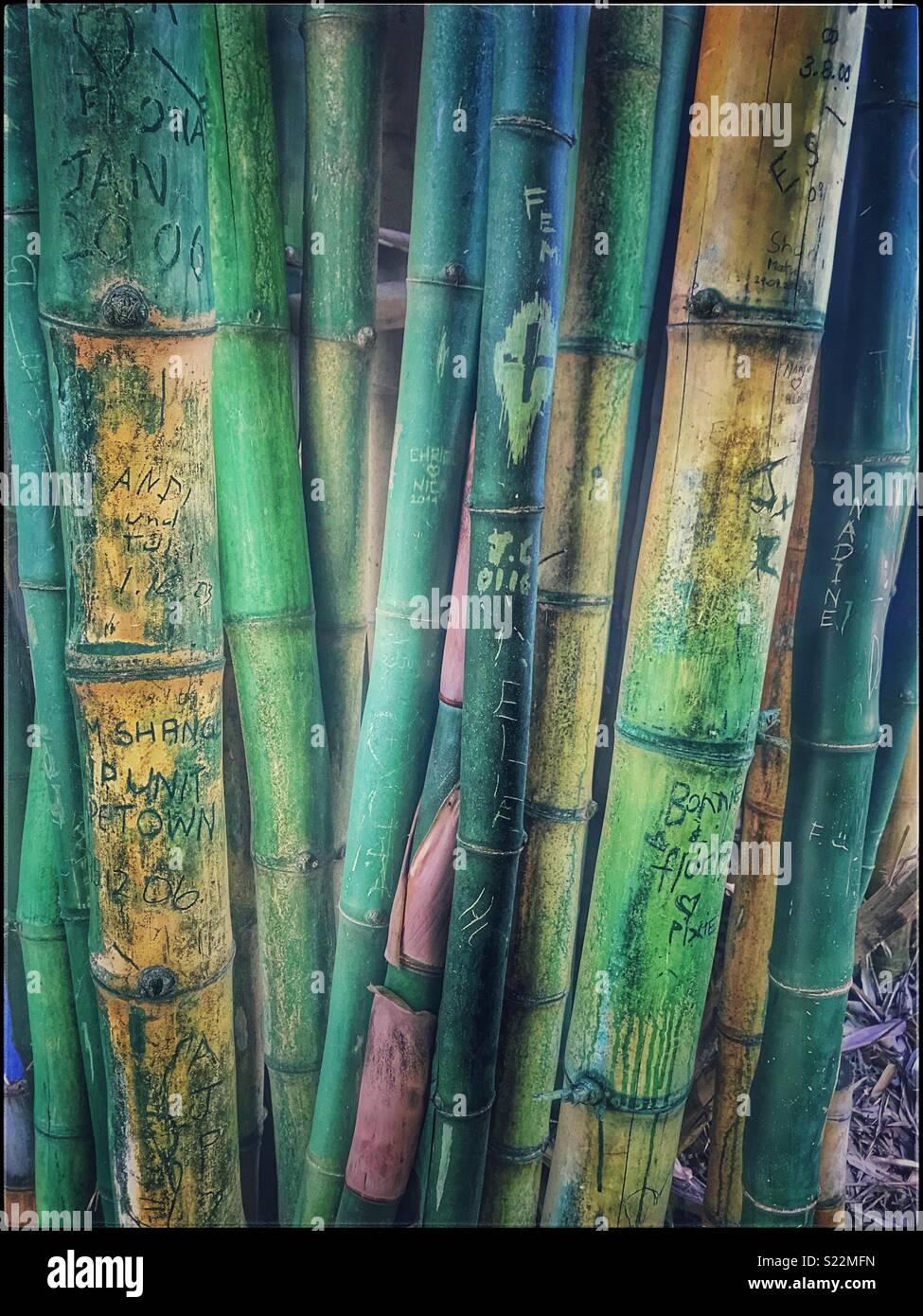 Noms gravés sur les plantes de bambou dans les jardins de ...
