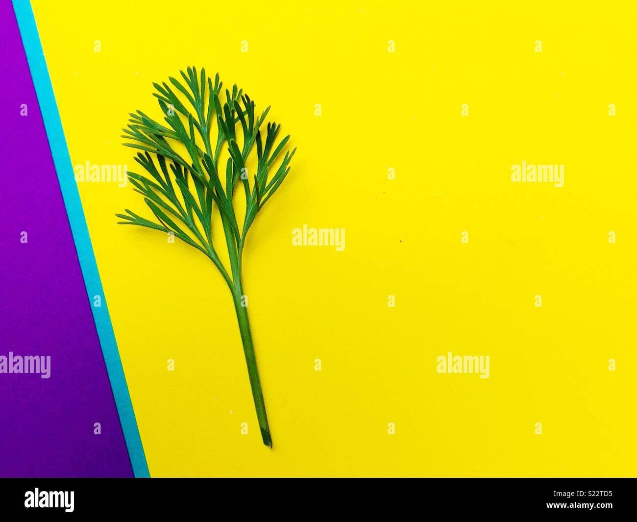 Une feuille sur un fond violet et jaune Photo Stock