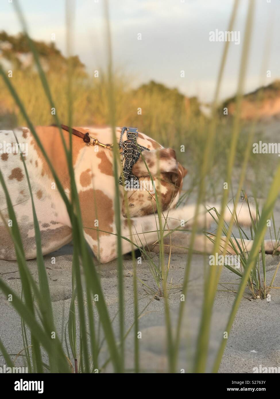 Bashful sur la plage Photo Stock