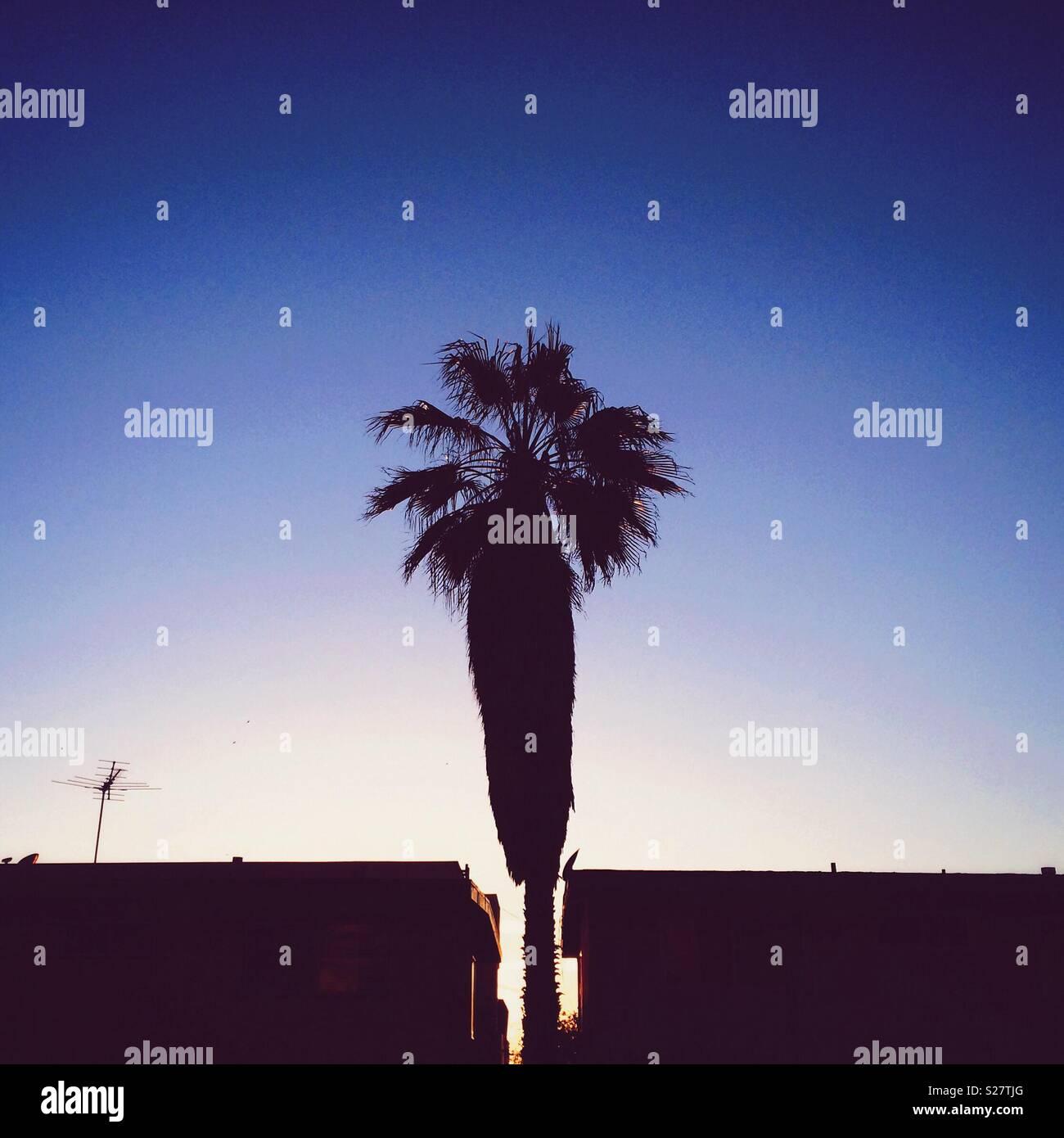 Un palmier et l'antenne TV sont découpé sur un ciel sombre dans El Porto, Californie près de Manhattan Beach Banque D'Images
