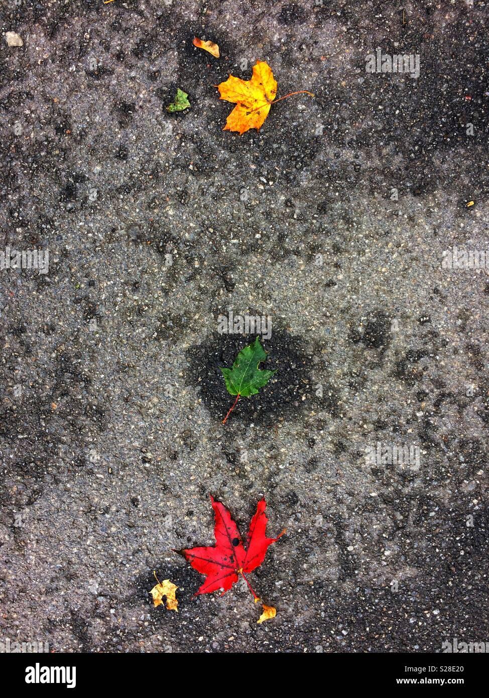 Feu par nature - presque n la séquence de couleur... Banque D'Images
