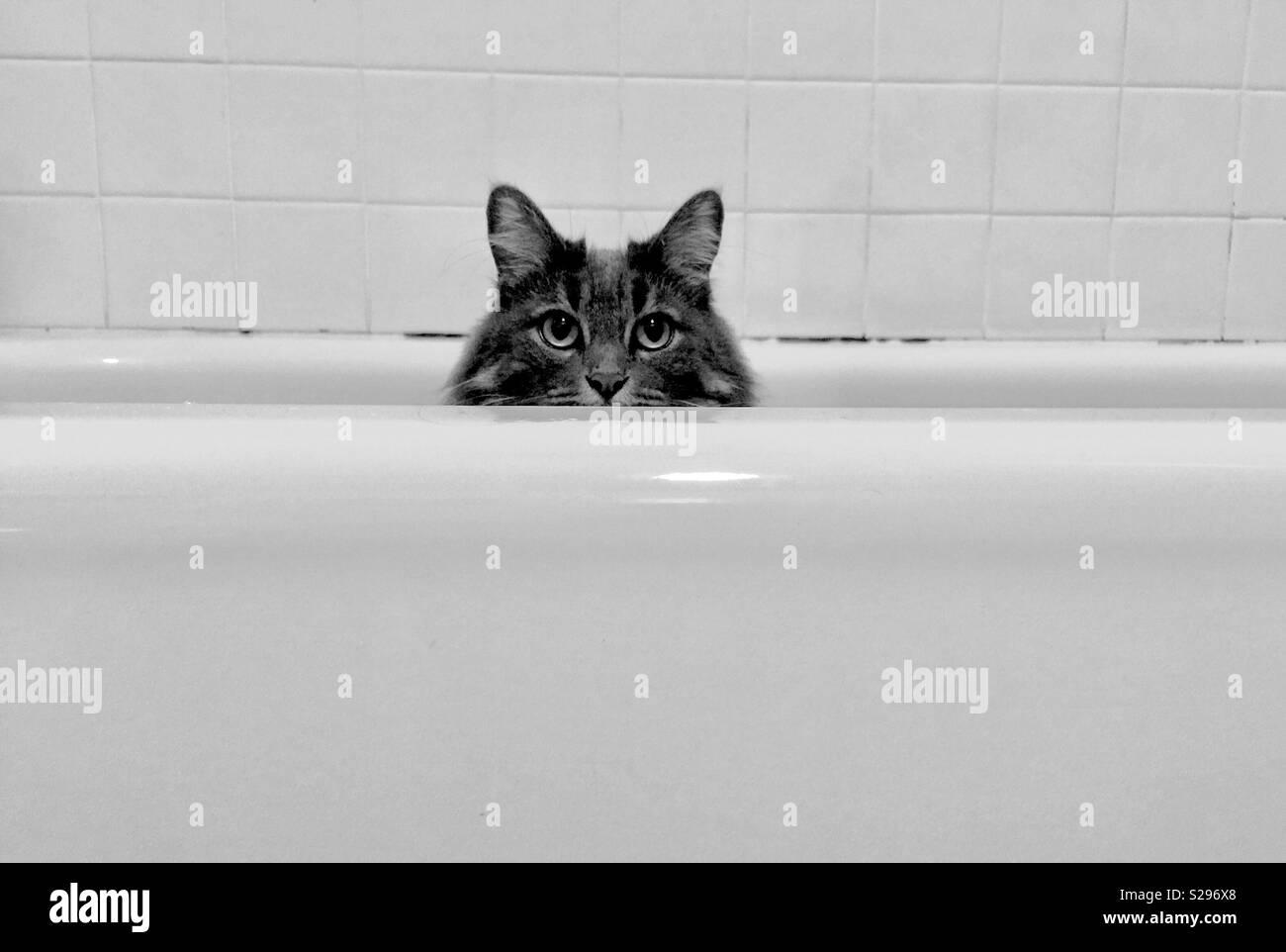 Chat dans une baignoire. Photo Stock