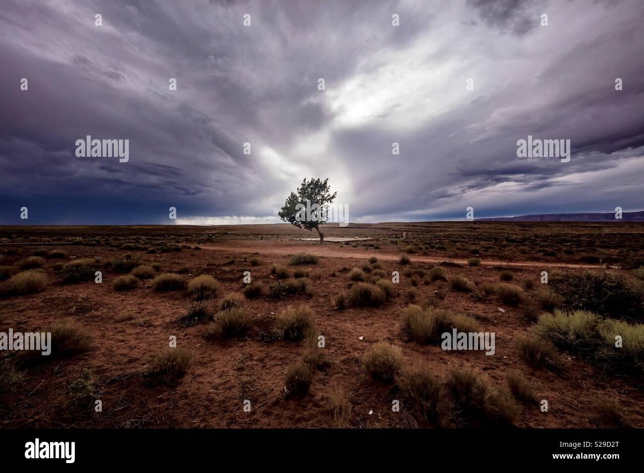 Arbre du désert Photo Stock