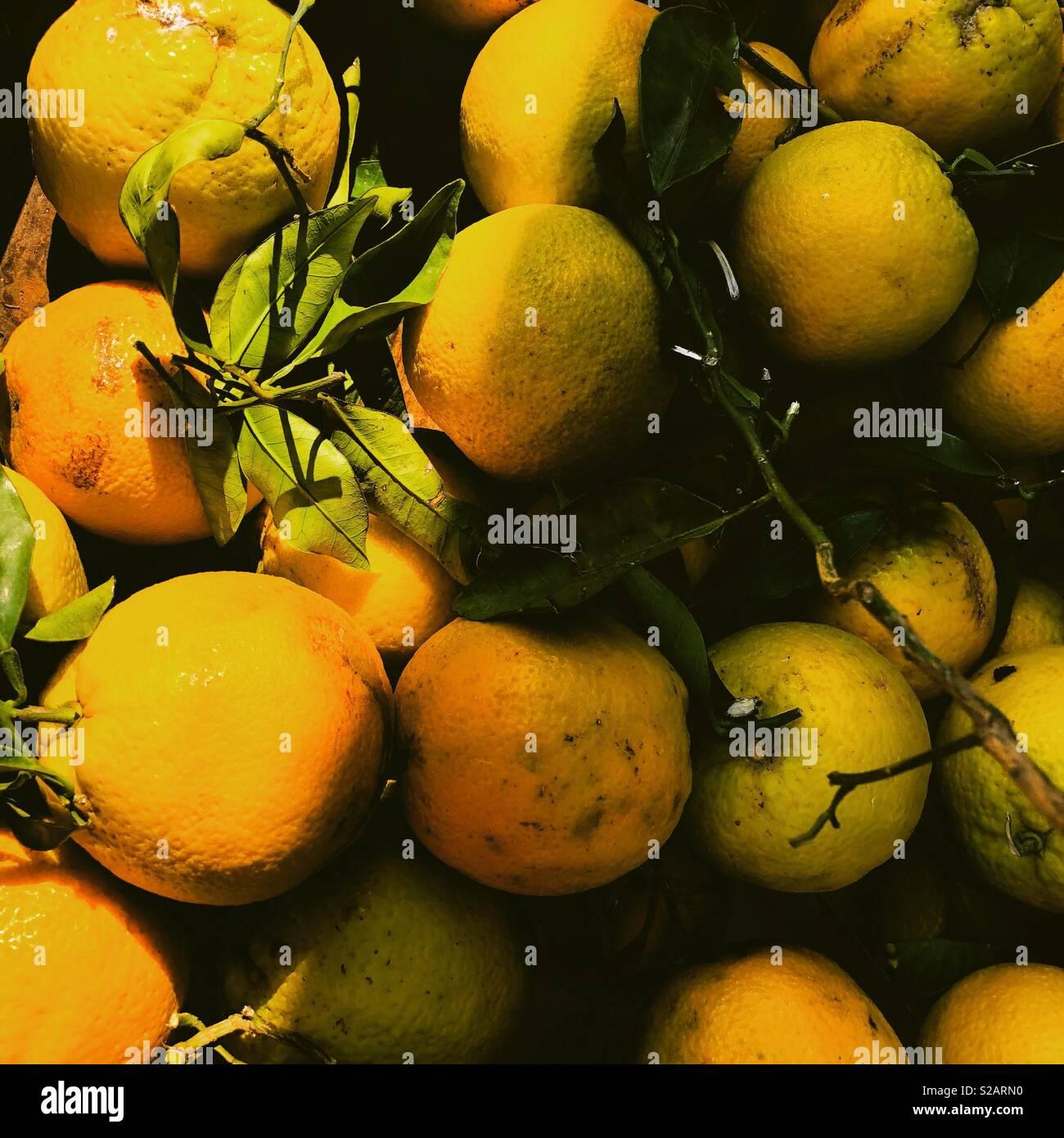 Oranges dans le marché du samedi à Voulagmeni Athènes Grèce Photo Stock