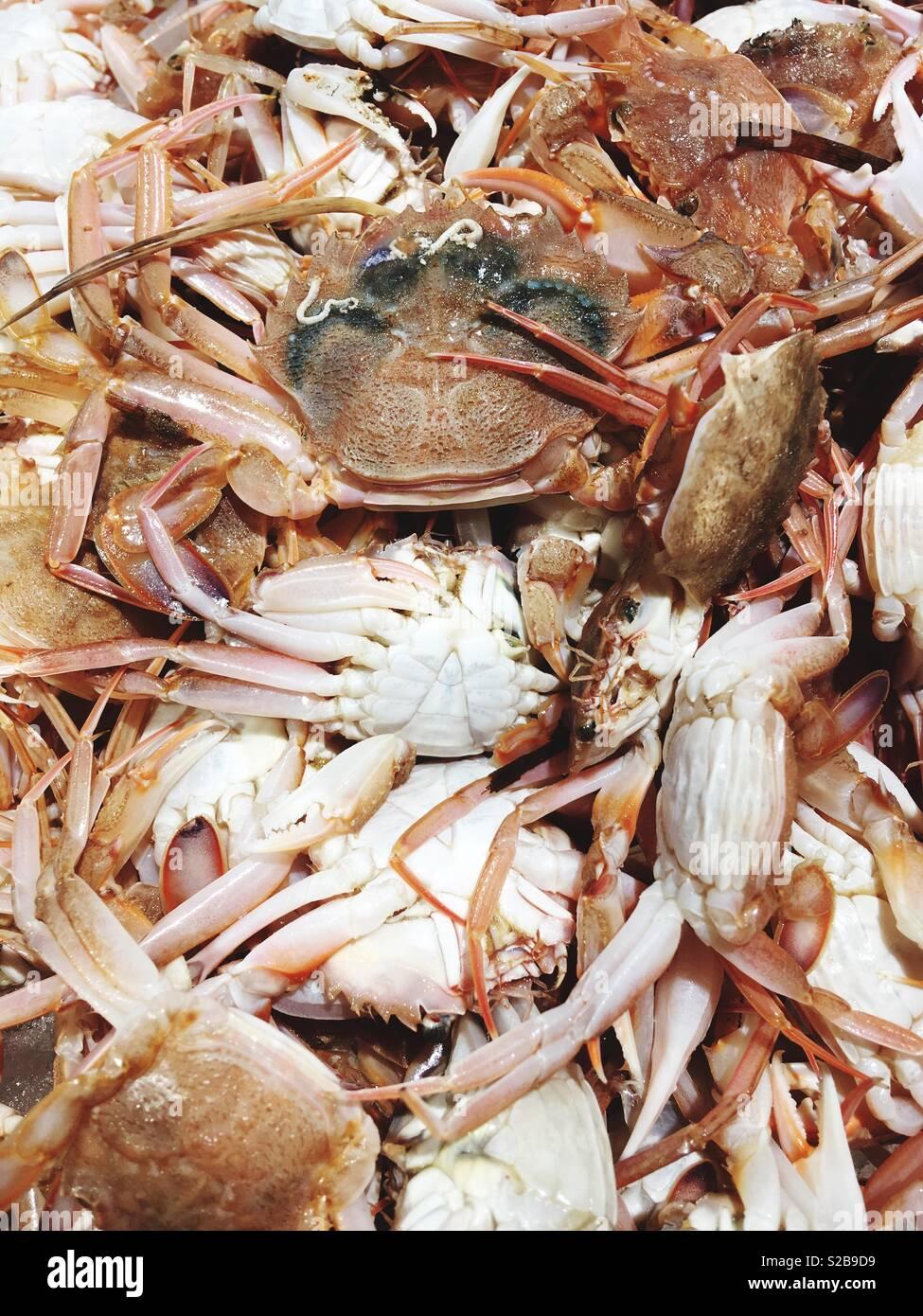 Les crabes sur l'affichage Photo Stock