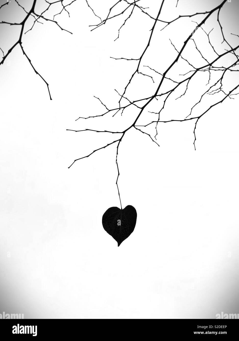 Une feuille en forme de coeur solitaire sur une branche nue. Photo Stock
