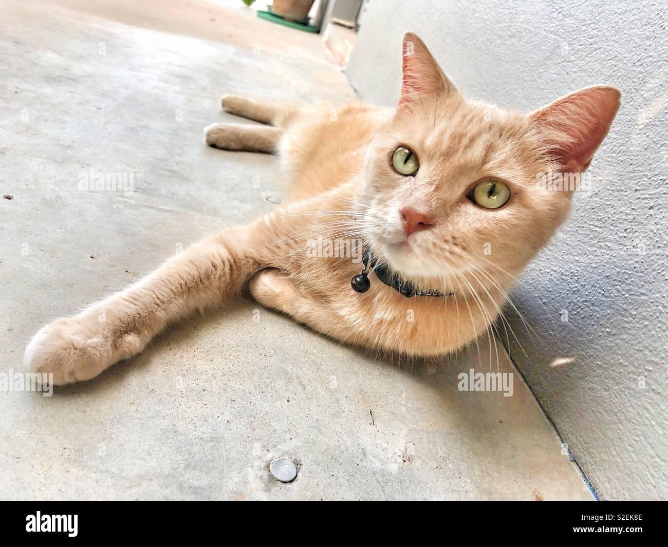 adolescent gingembre chatte meilleur massage pour le sexe