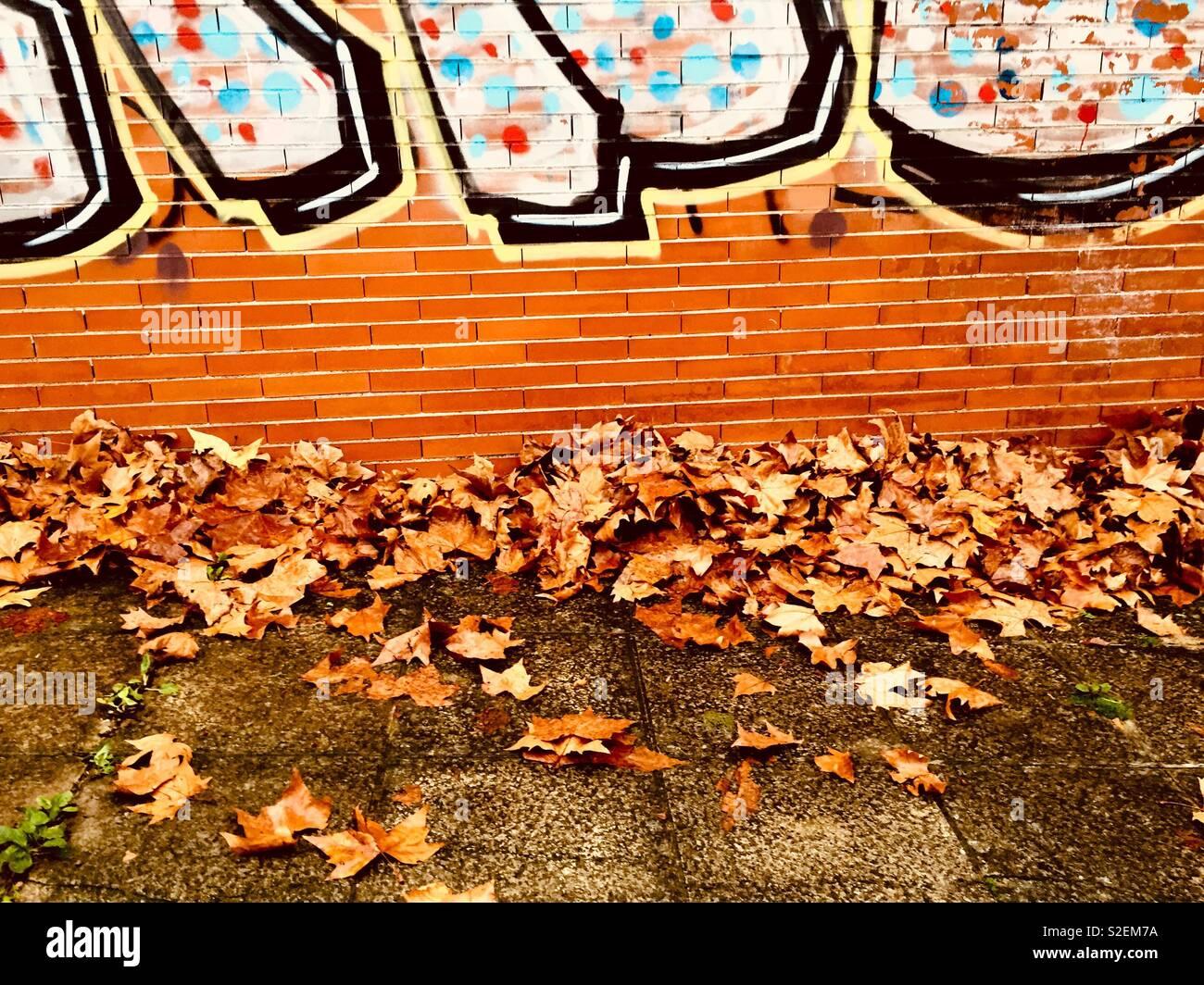Sécher les feuilles d'automne sur un mur avec un graffiti Banque D'Images