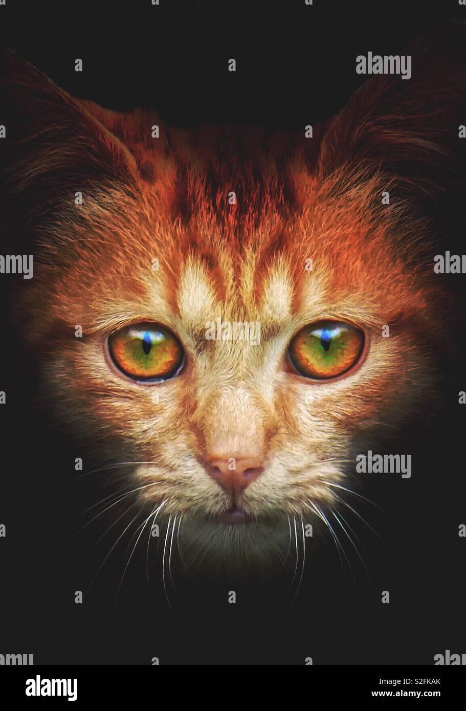 Le beau brun chat portrait Banque D'Images