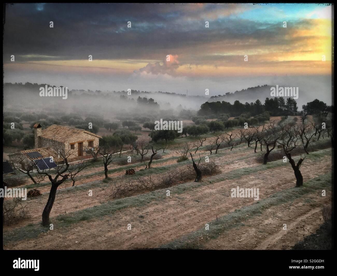 Une vue sur le lever du soleil d'hiver d'amandiers et d'une ferme, Catalogne, Espagne. Photo Stock