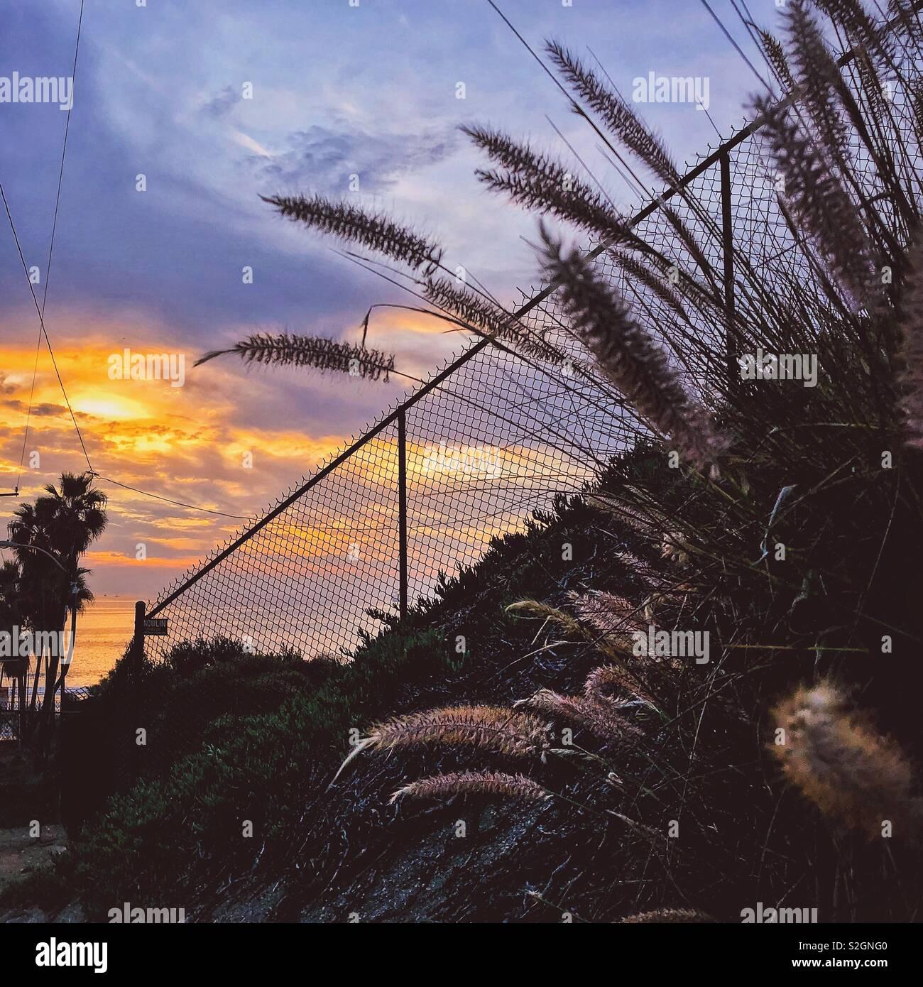 Chat conseils le long d'une clôture de près de l'océan pacifique Banque D'Images