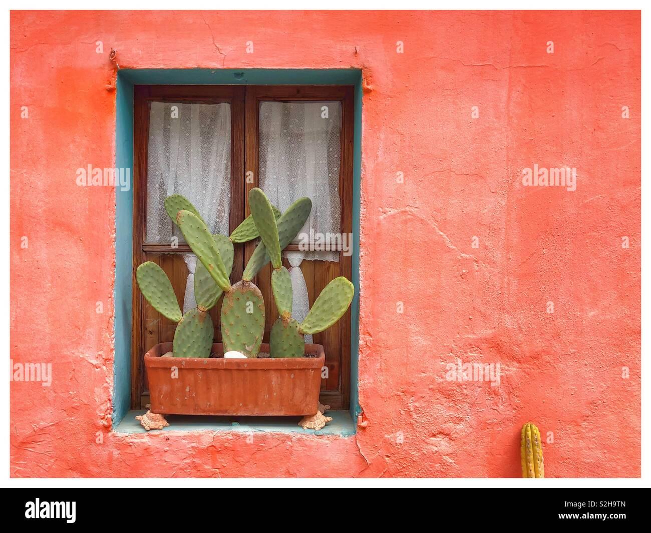 Mur d\'une chambre avec fenêtre en bois orange ourlé de bleu avec pot ...