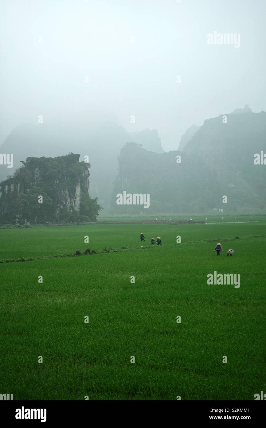 Les rizières, un agriculteur, les collines et la brume dans le Nord Vietnam. La vie quotidienne rurale en Asie. Photo Stock
