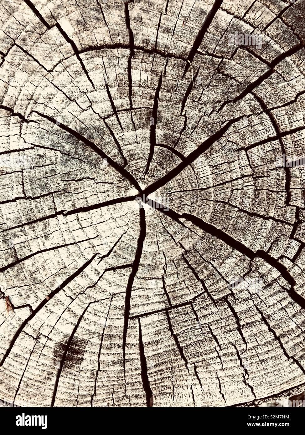 Fractionnement d'arbres Photo Stock