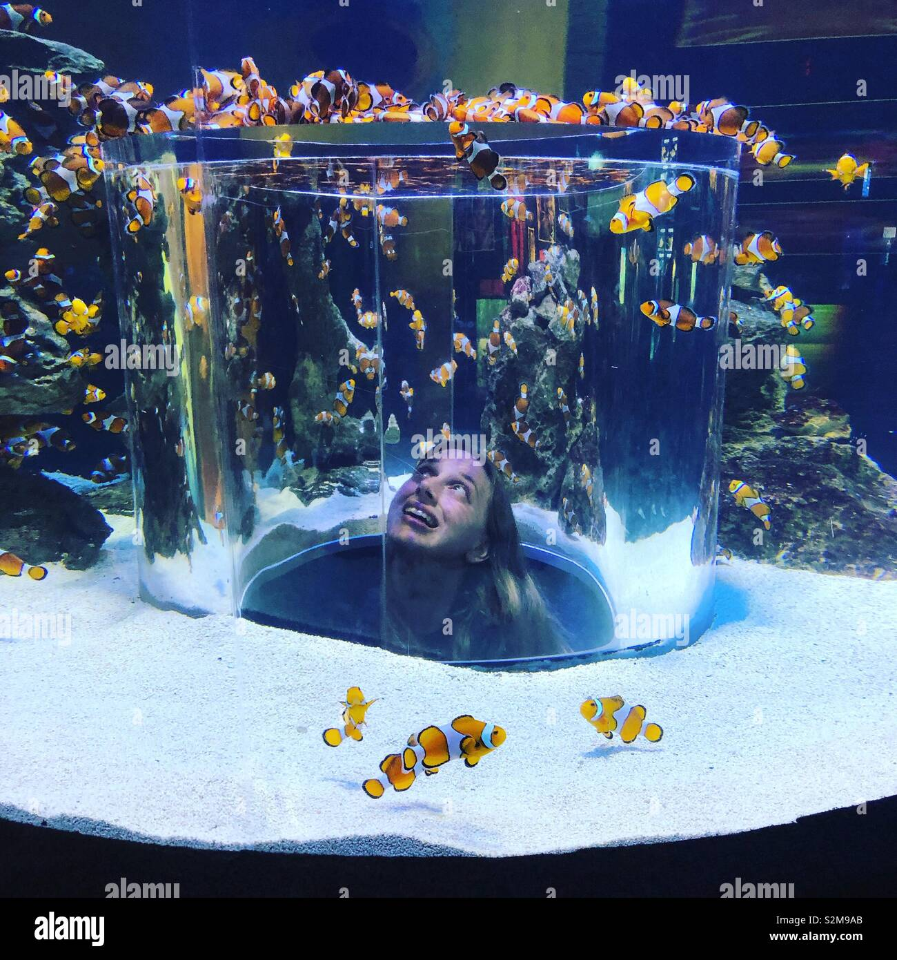 Two Oceans Aquarium, Cape Town Photo Stock