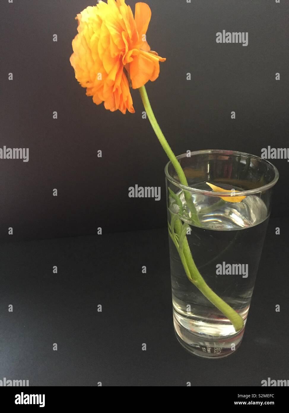 Fleur de réfraction Photo Stock