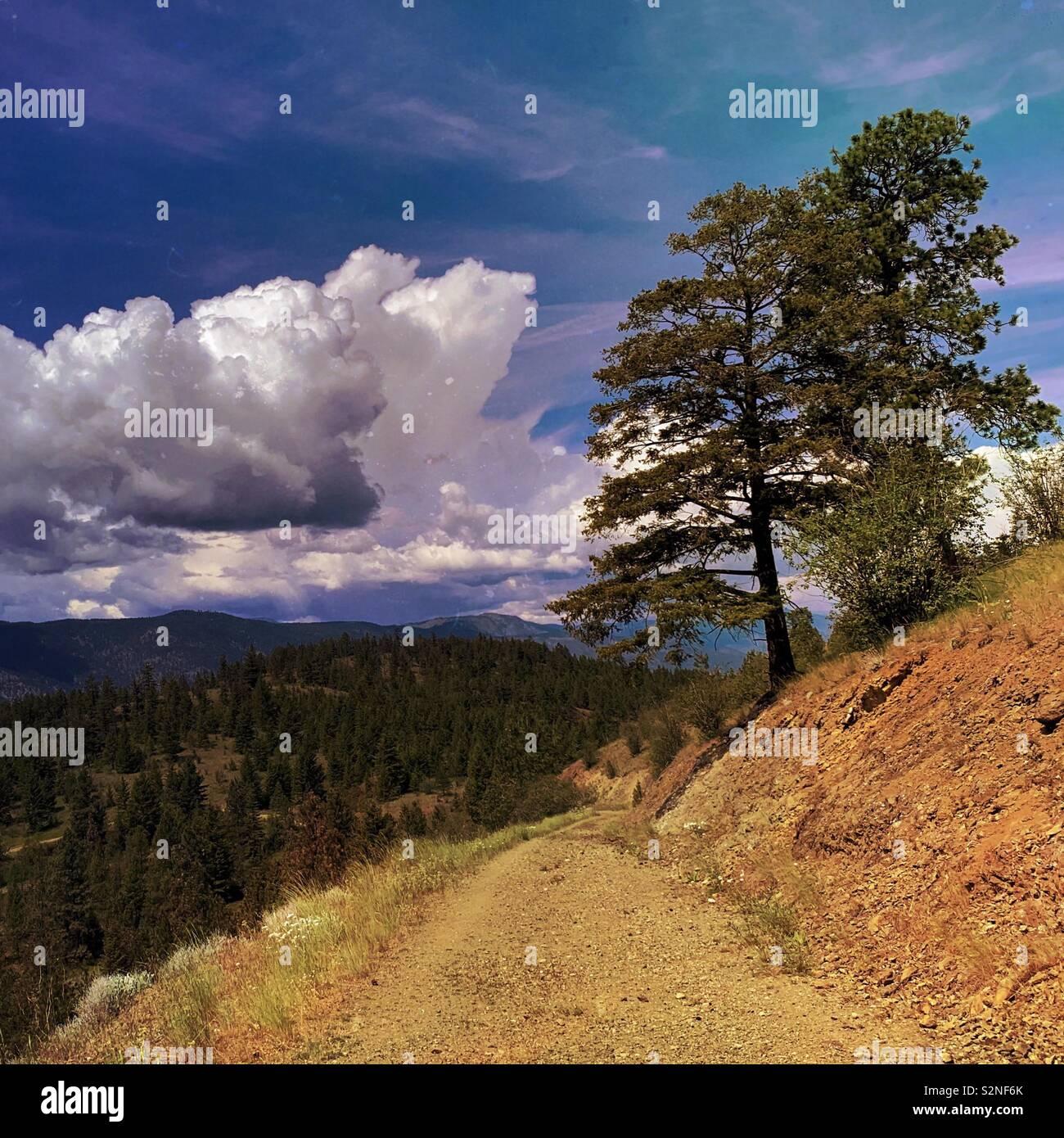 Sentier de randonnée de la terre avec les arbres à feuilles persistantes, ciel bleu et nuages blancs au loin. Les carrés. Banque D'Images