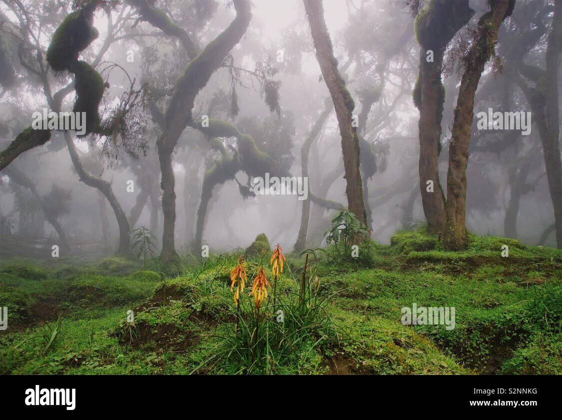 Forêt Harenna Banque D'Images