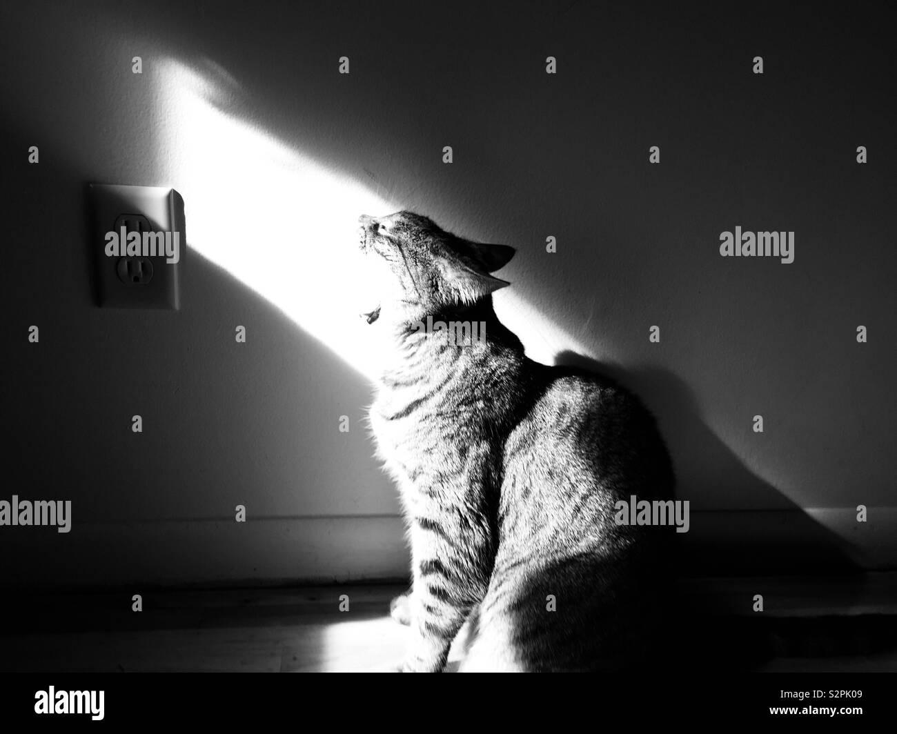 Mon chat en essayant de manger le soleil Banque D'Images