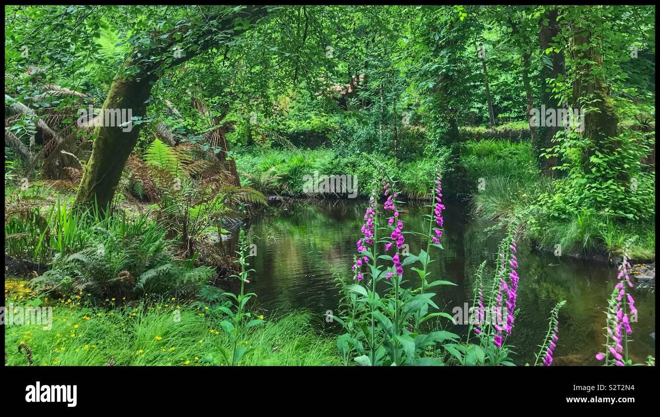 Étang isolé dans les bois Photo Stock