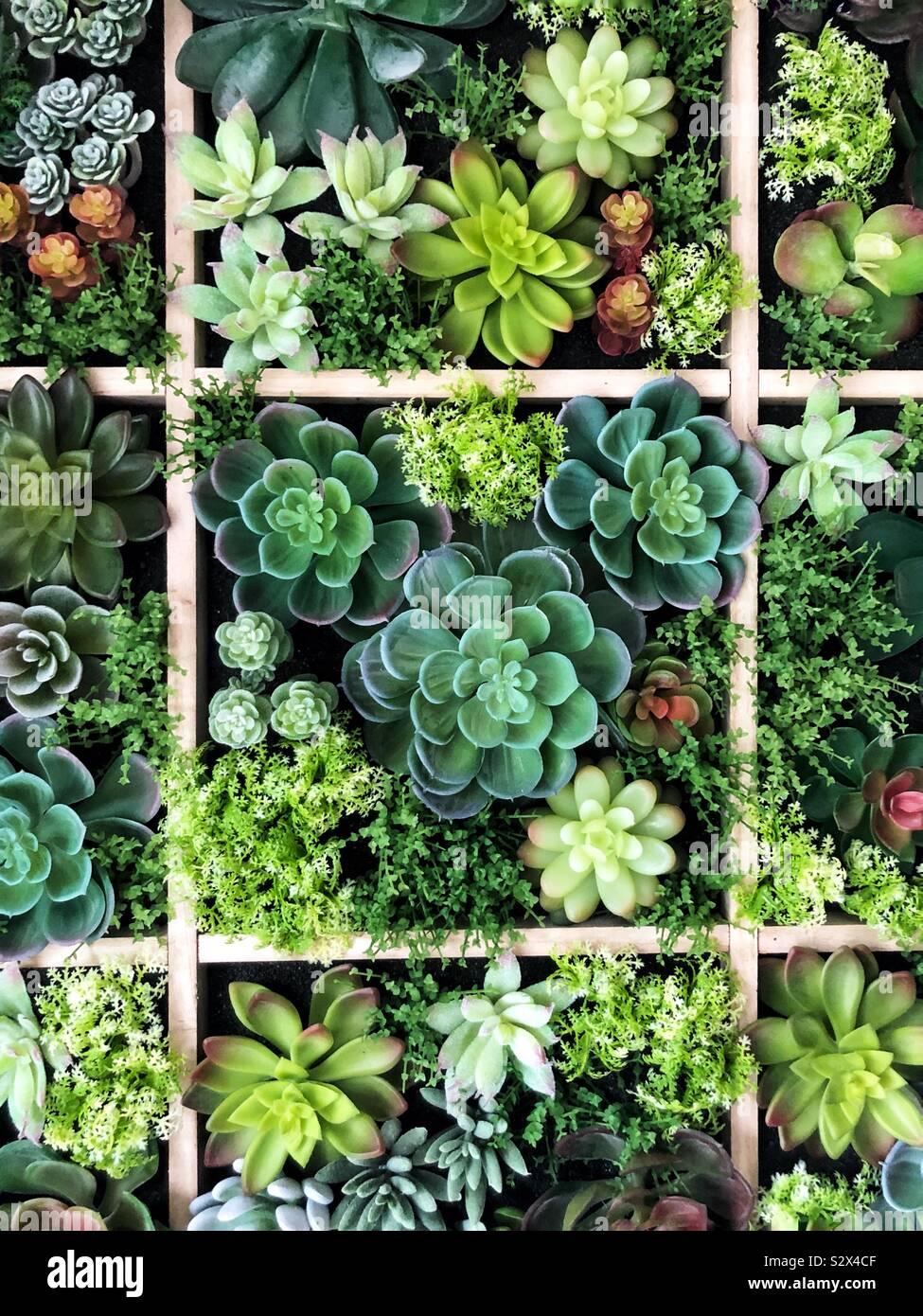 Mur de succulentes Banque D'Images