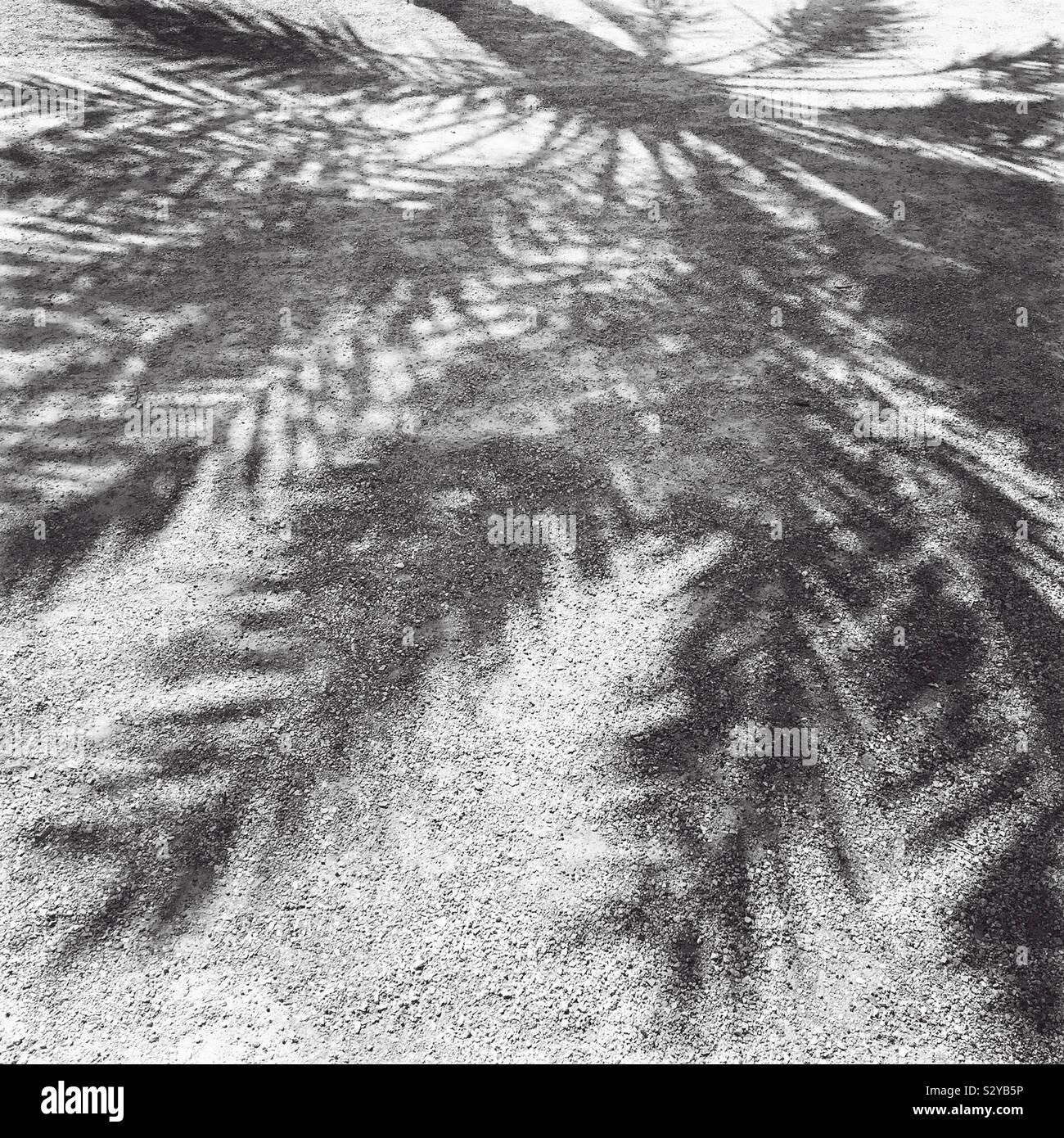 L'ombre de longues feuilles et branches d'un palmier sur le ciment grenu d'un parking. Banque D'Images