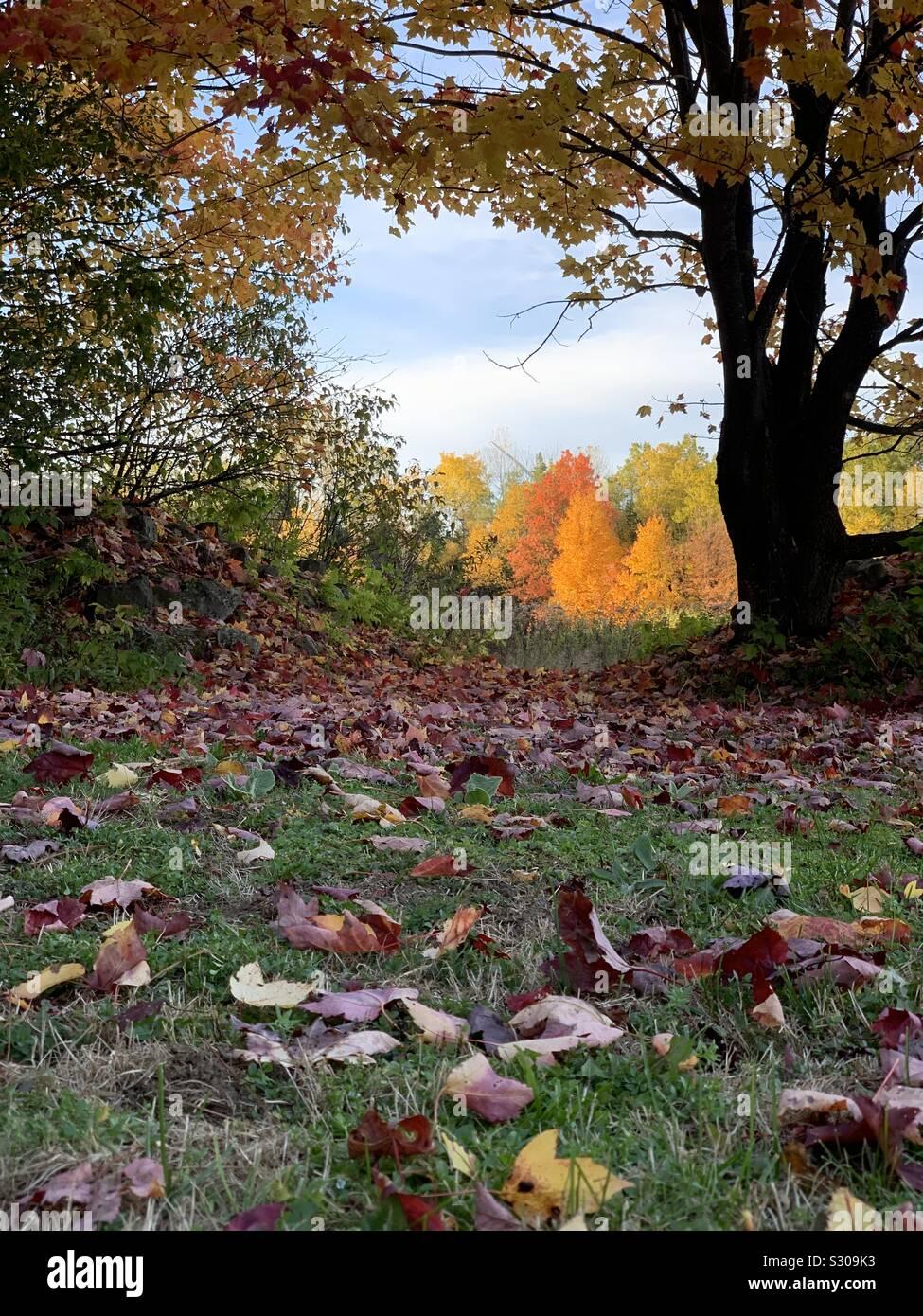 Les feuilles d'automne autour de coucher du soleil Banque D'Images