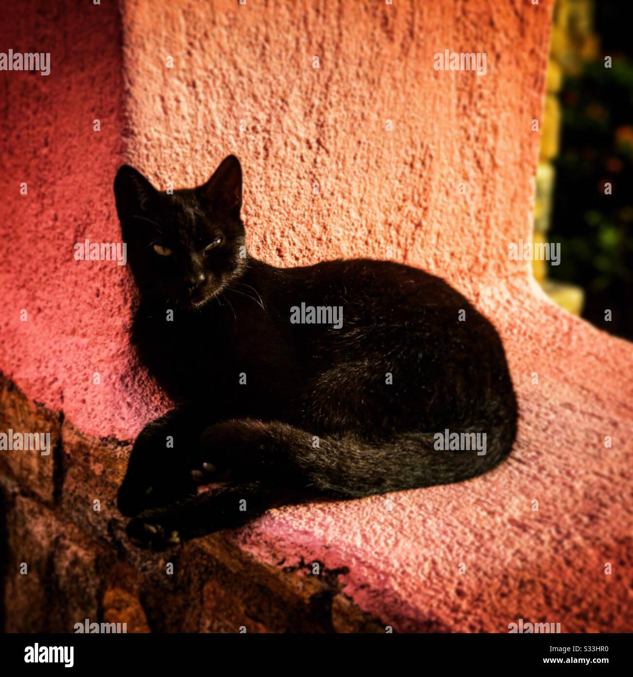 Chat noir reposant au soleil sur un mur de ferme grecque Banque D'Images