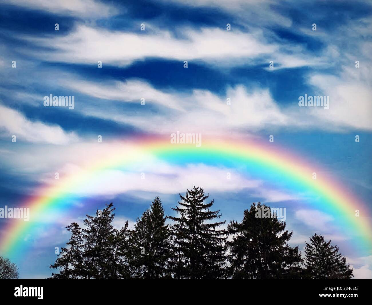 Rainbow au-dessus des feuilles persistantes dans un ciel bleu de nuages wispy blancs Banque D'Images