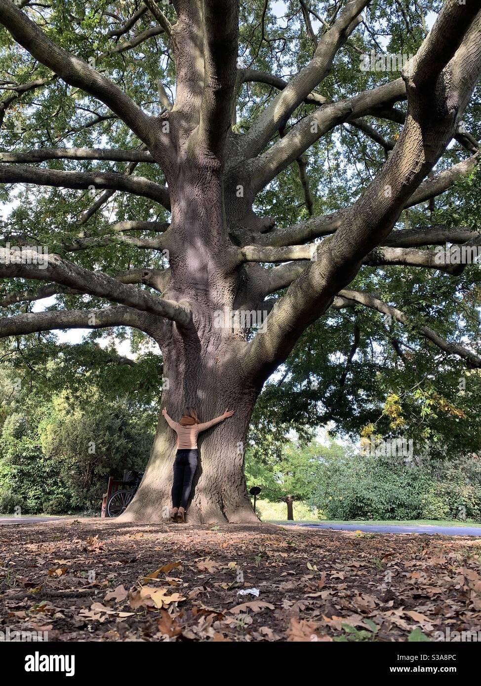 Femme embrassant un grand chêne dans le parc de Dulwich Banque D'Images