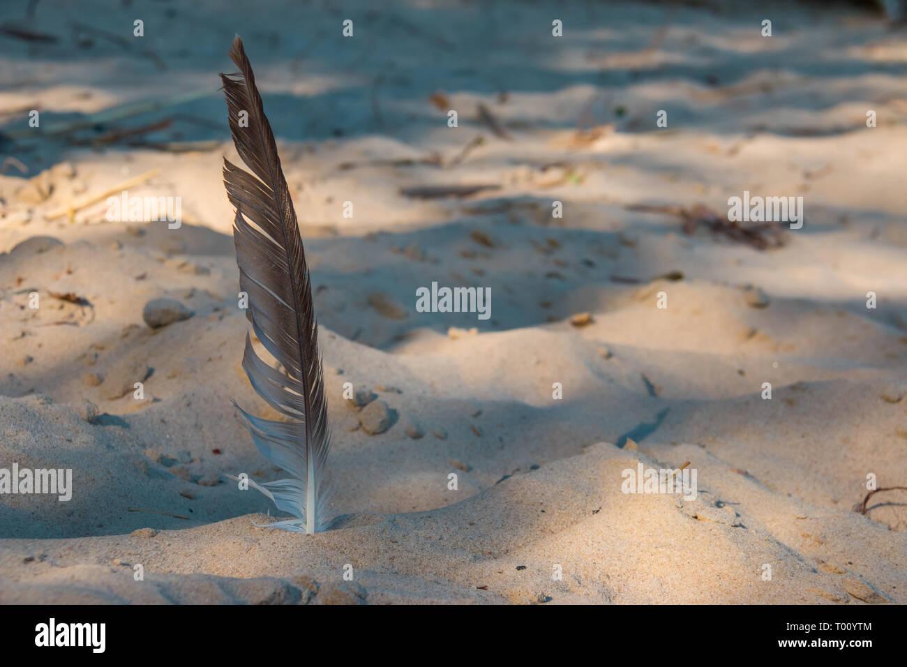 Une plume d'oiseau est dans le sable Photo Stock