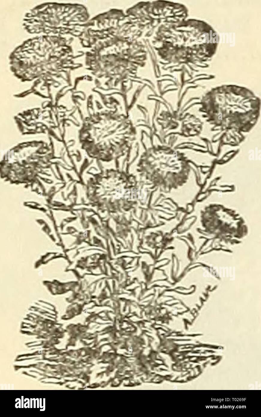 Dreer\'s garden : calendrier 1886 . dreersgardencale1886henr ...