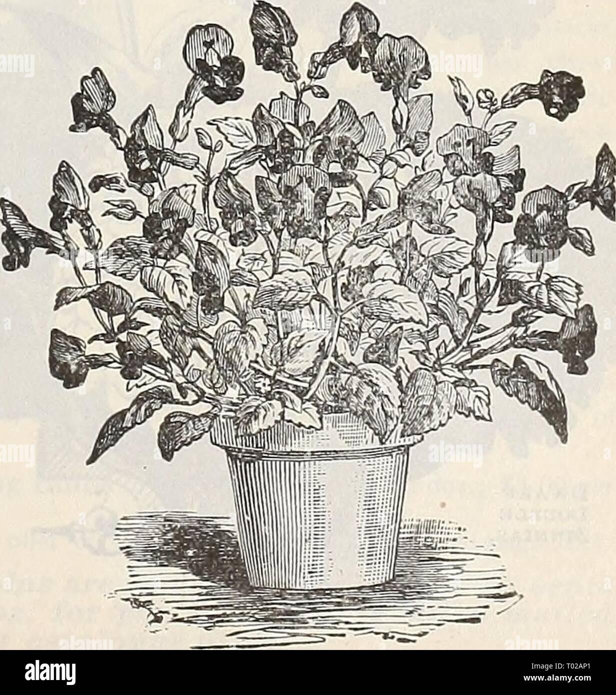 Petites Plantes Fleuries En Pot pot plants suitable for winter photos & pot plants suitable