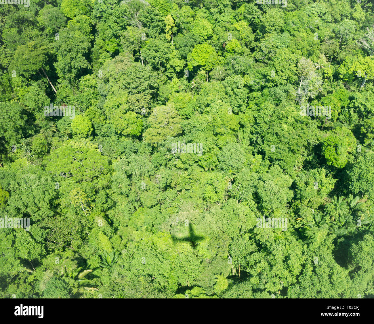 Costa Rica Rainforest jungle airplane, péninsule d'Osa, près de la baie Drake. Photo Stock